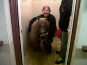 Pony in lift